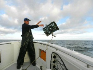 Wells Maine Lobstering, Wells Maine Striper Fishing Charter